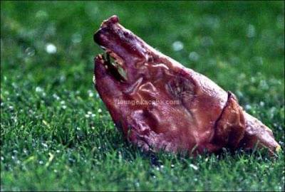 kepala babi