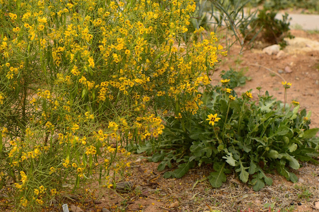 small sunny garden, desert garden, amy myers, photography, about the garden,
