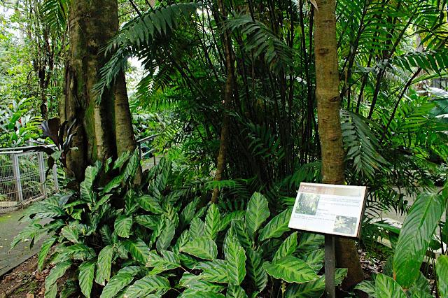 magen del Arboretum del Parque Zoológico y Jardín Botánico Nacional Simón Bolívar