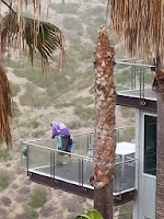 glass fence cleaning experts