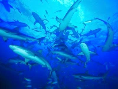 grupo de tiburones