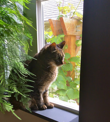 Eamon the cat sees birds outside