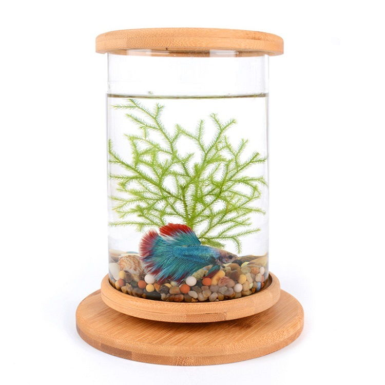 Image Can a Betta Fish Live in a Fishbowl