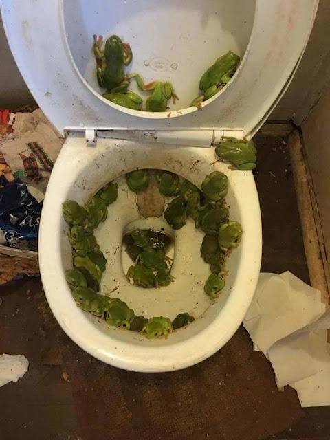 A toilet after a flood