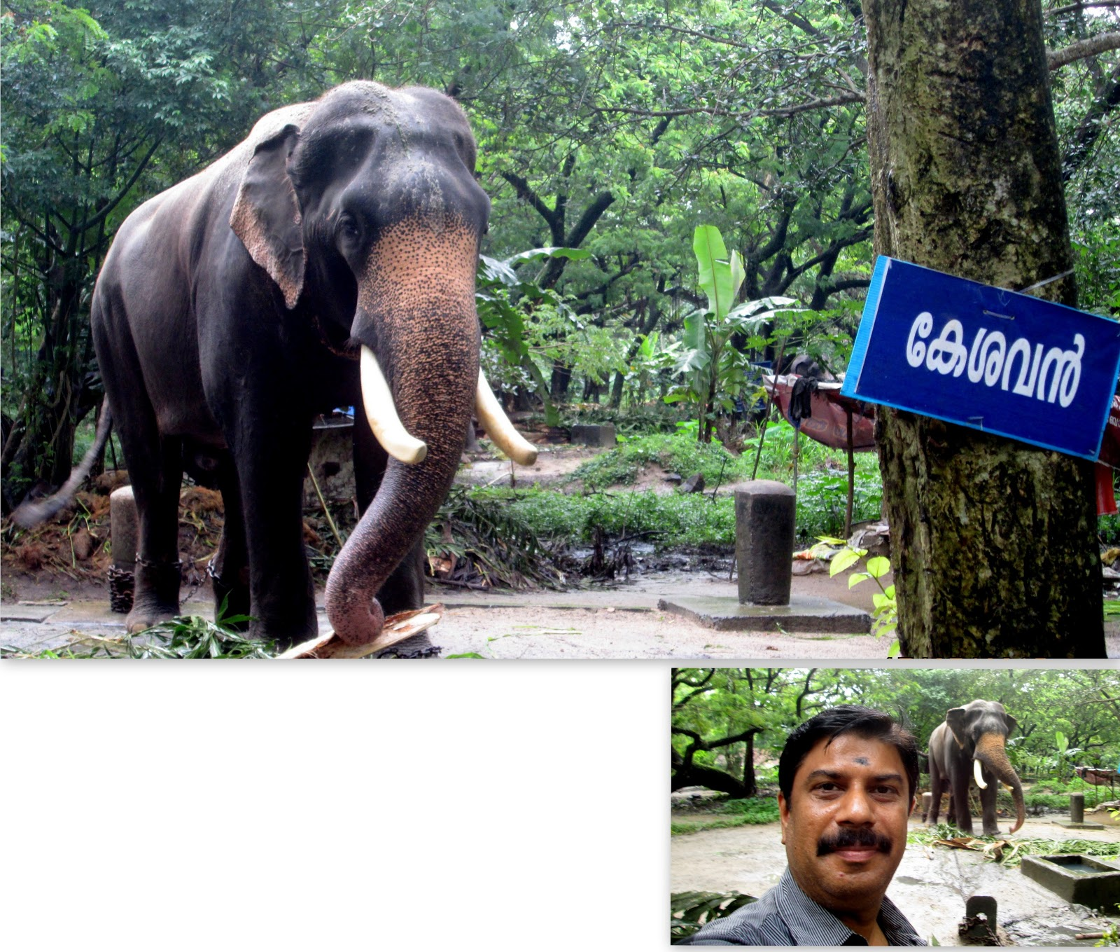 Elephant Sanctuary at Punnathur Kotta, Kerala