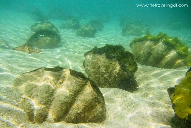 Giant Clam Sanctuary in Samal Island