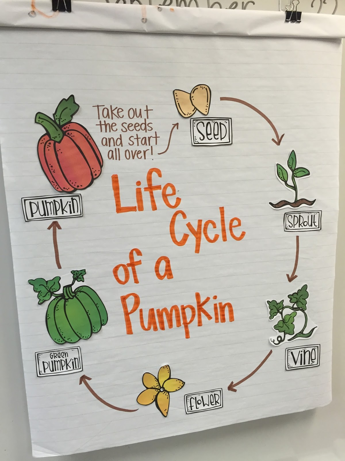 parts of a pumpkin diagram single pole thermostat wiring life cycle circuit connection