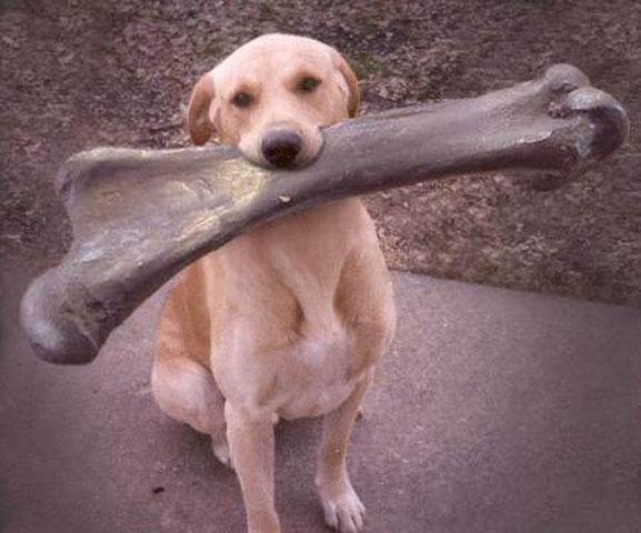 Perro con hueso gigante