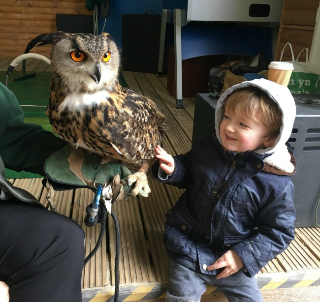 #MySundayPhoto-number-12-toddler-with-an-owl