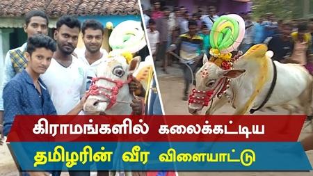 """PONGAL"" Celebration – 2018 | Tamilian | Tamizhar Thirunaal  | Brave Game | Bulls"