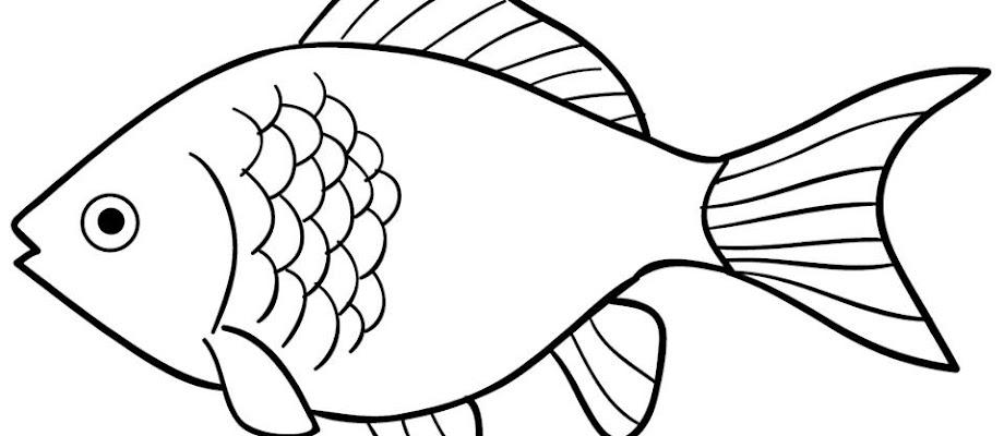 47 Mewarnai Ikan Hias Terpopuler Lingkar Png