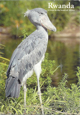 Rwanda bird