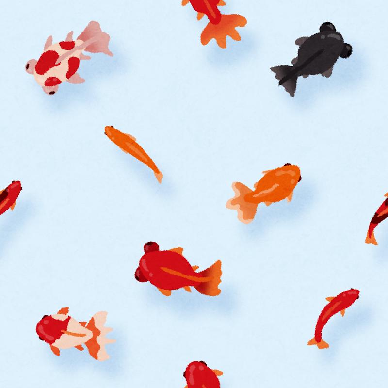 金魚のイラストのパターン かわいいフリー素材集 いらすとや