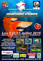 manche-championnat-france-europe-guppy-2016-etrechy