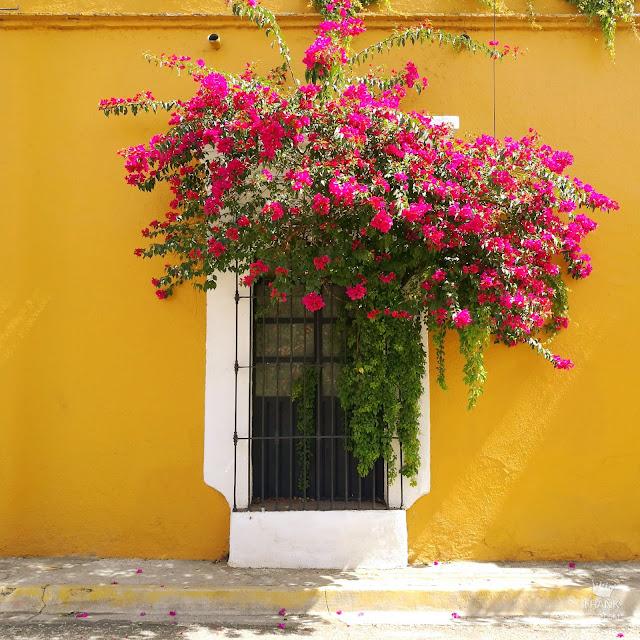 Casa amarilla colonial con bugambilia