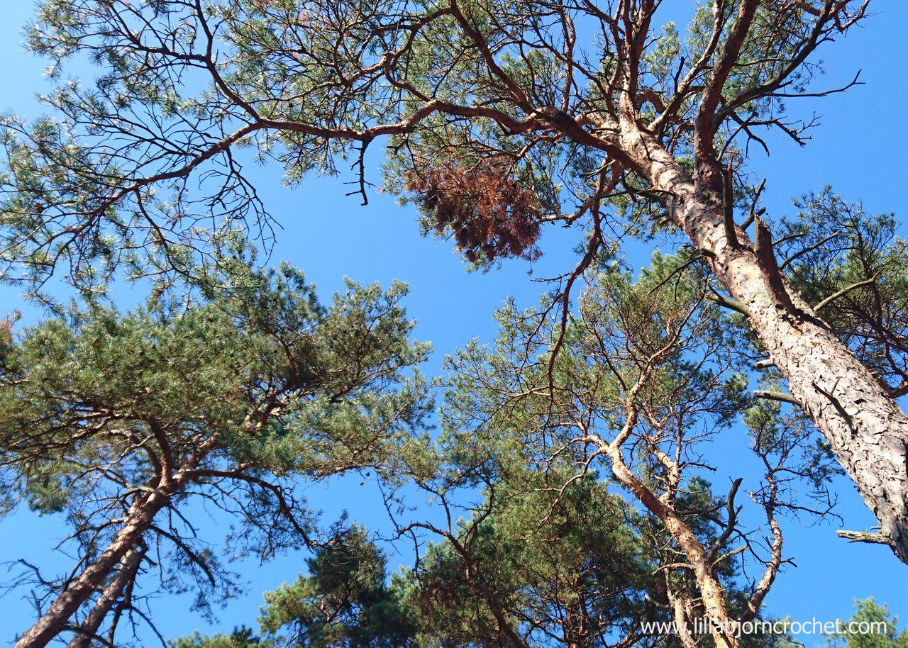 Trees in Höllviken in Sweden