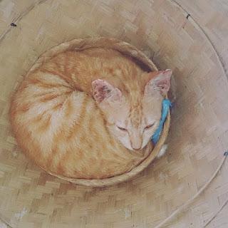 Kenali Perilaku Kucing anda dari Gerakan Telinga & Mata