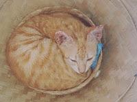 Kenali Perilaku Kucing anda dari Gerakan Telinga & Mata Agar Terhindar Dari Serangannya