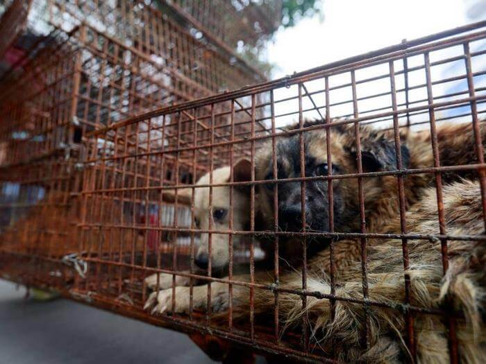 China Has Finally Banned Dog Meat From The Infamous Yulin Festival