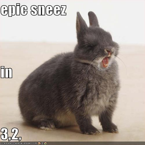 Funny Rabbit Pictures 16