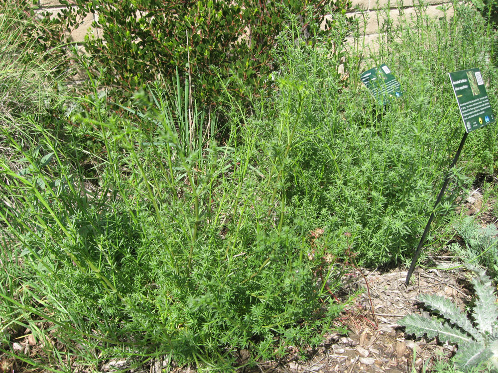 Mother Nature 39 S Backyard A Water Wise Garden Plant Of