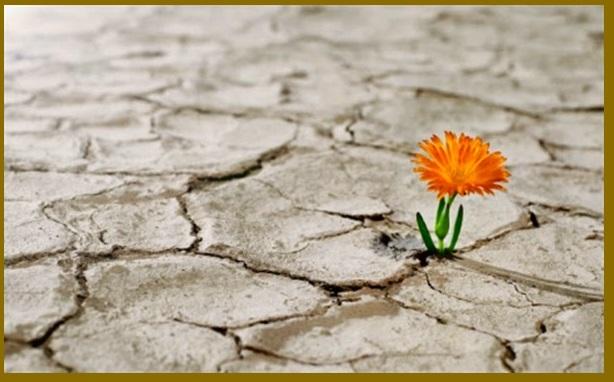 A Flor Que Nasce No Deserto Salmo 11988