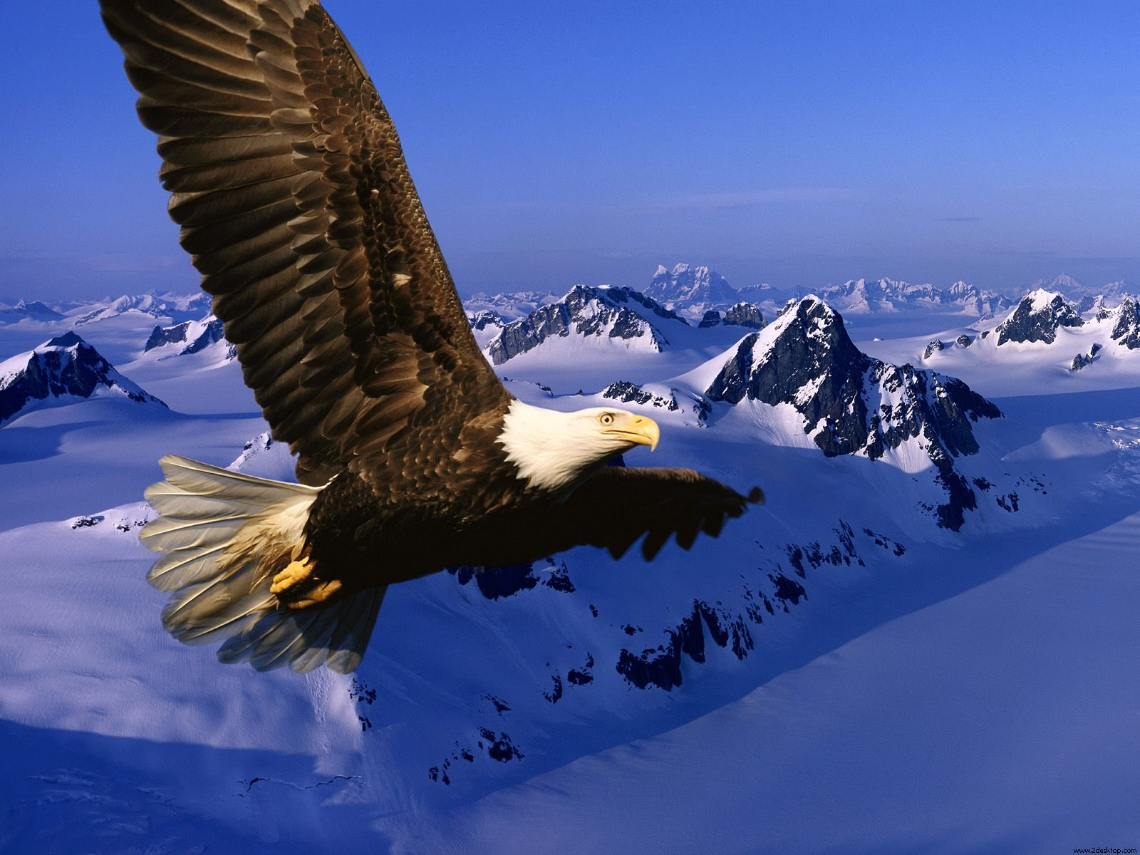 Blossom and become beautiful in Christ…On Eagles wings….Post navigation