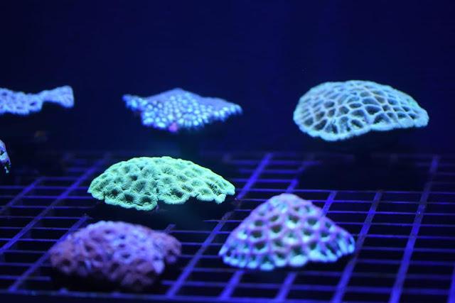 Exhibición de corales