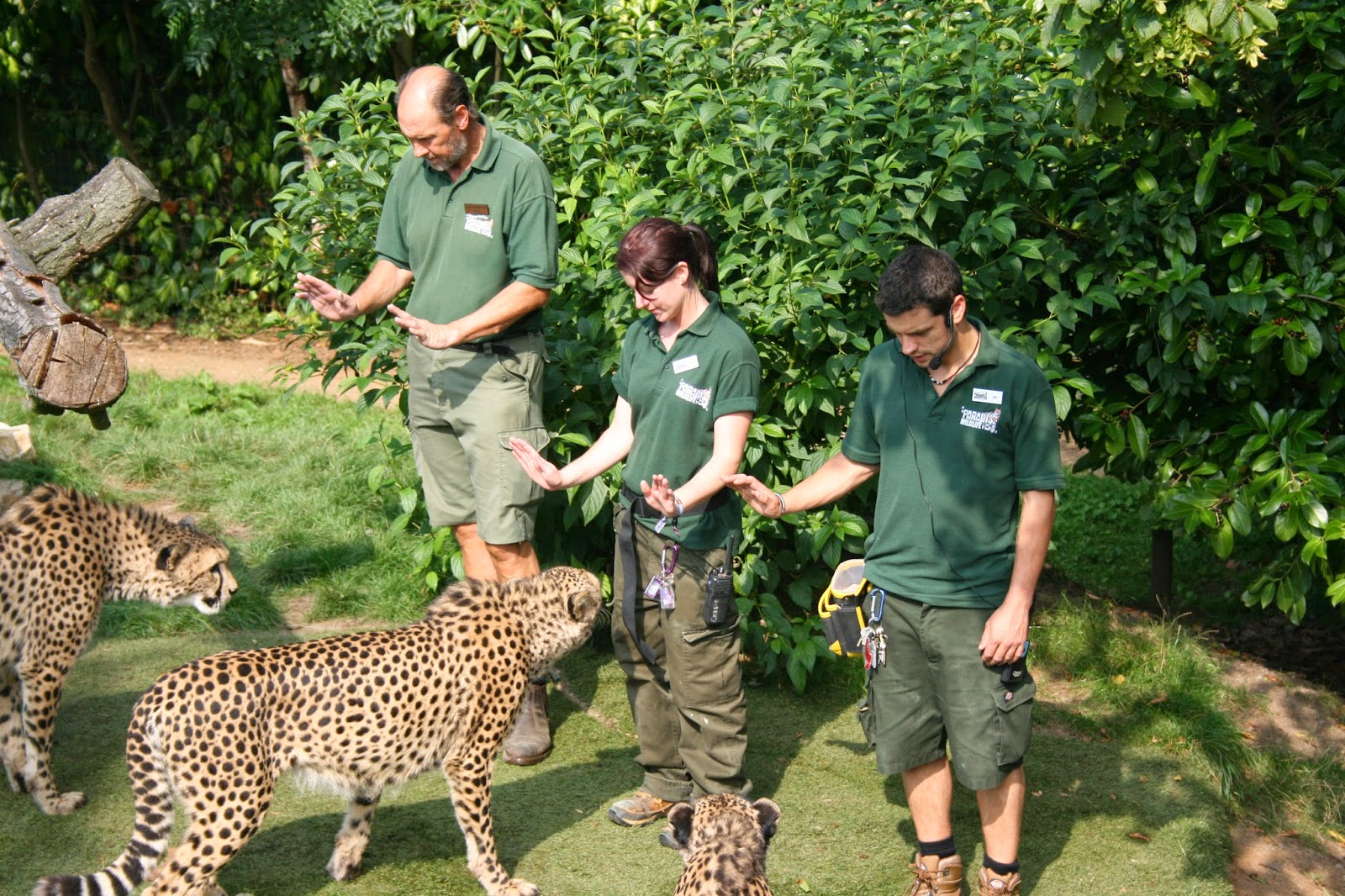 Paradise Zoo News: How to become a Zookeeper:
