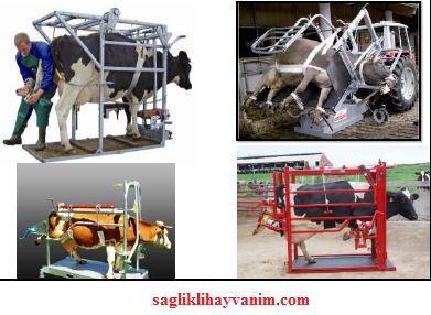 inekleri özel zapt etme kafesi