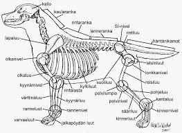 Koiran Kyynärät