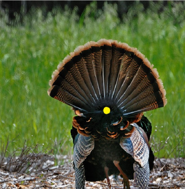 Full Draw Outdoor Productions Blog  Wild Turkey Shot