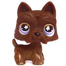 Littlest Pet Shop Special Scottie (#No #) Pet