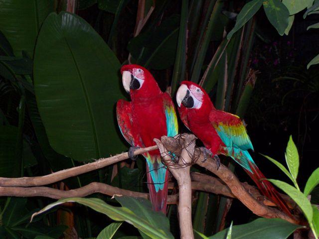 As aves são os principais alvos do comércio ilegal, representando mais de 80% de todas as espécies comercializadas.