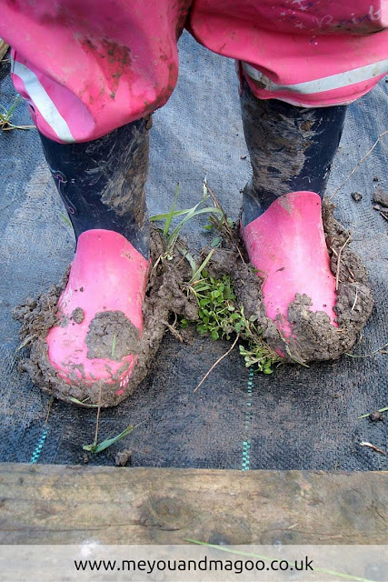 young child wearing very muddy boots after digging the soil on our allotment