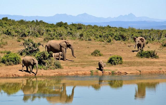 7 acciones para salvar a animales en peligro de extinción