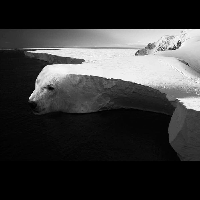 11-Polar-Bear-Ice-Sheet-Stalowa-Wola-Surreal-Photos-of-Landscapes-and-Architecture-with-Animals-www-designstack-co