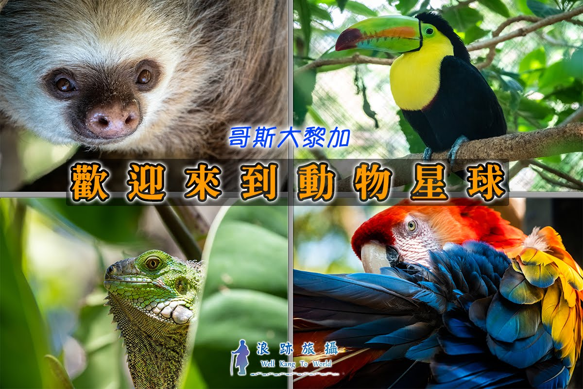 哥斯大黎加 Herpetological Refuge Costa Rica 樹懶 Sloth 緋紅金剛鸚鵡 大嘴鳥 巨嘴鳥