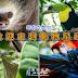 【哥斯大黎加】歡迎來到動物星球頻道 Feat. 樹懶、緋紅金剛鸚鵡、大嘴鳥...blablabla