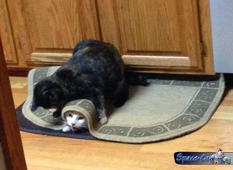 funny animals cats picture