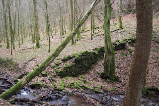 Im Wald, am rande eines kleinen Baches, stehen mit Moos bewachsene Mauerreste.