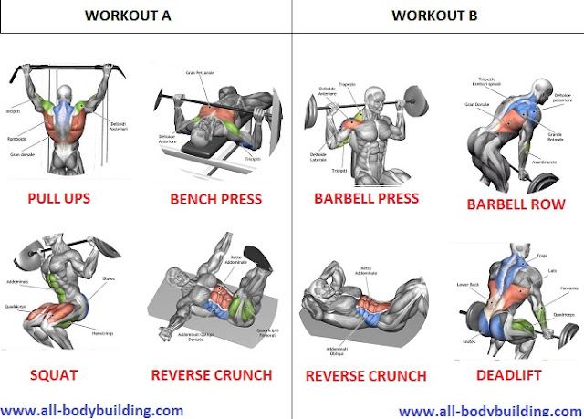 Looking For a Beginner Muscle Building Workout Routine? ~ multiple fitness