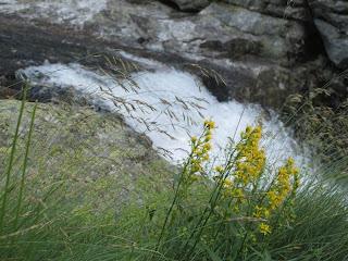 Wasser und Blumen