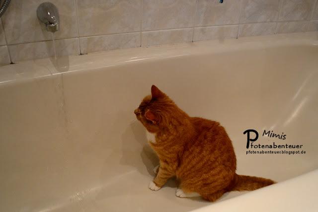 Katze Mimi sitzt in der Badewanne und beobachtet das Wasser