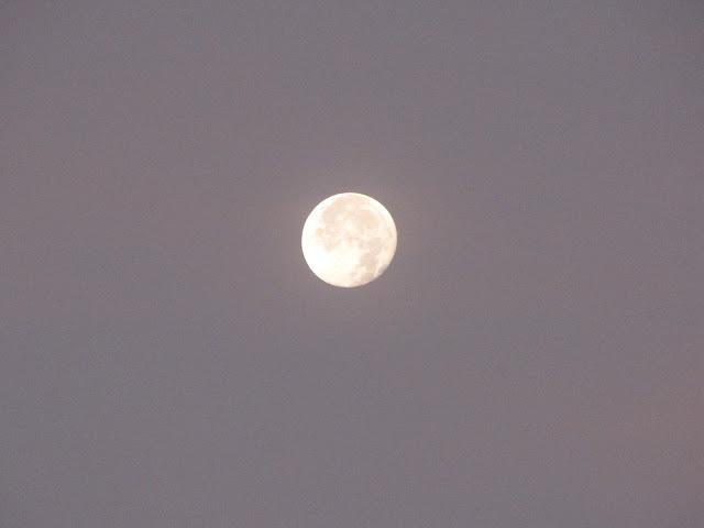 טיול ירח