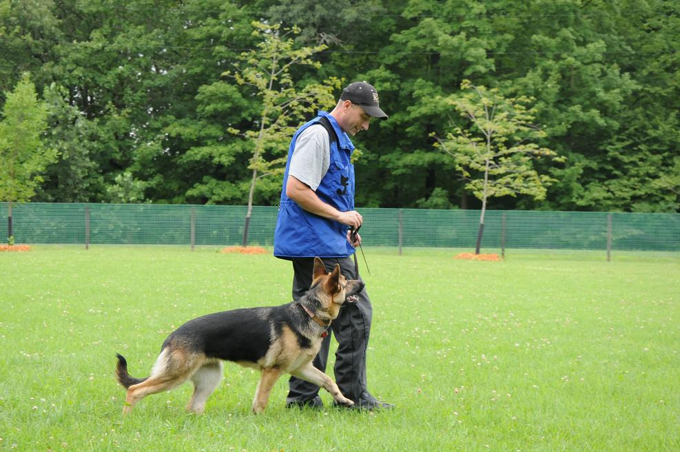 German-Shepherd-Heeling