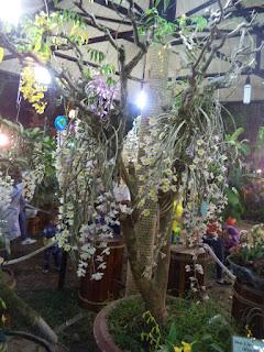 hoa lan hội hoa xuân 2016