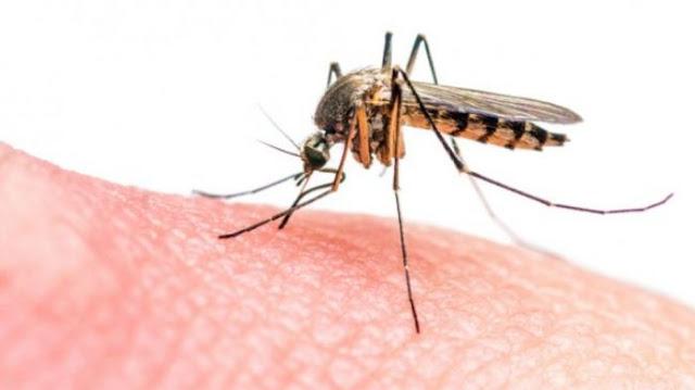 6 Tanaman Pengusir Nyamuk Alami Paling Ampuh, Cocok Ditanam di Rumah