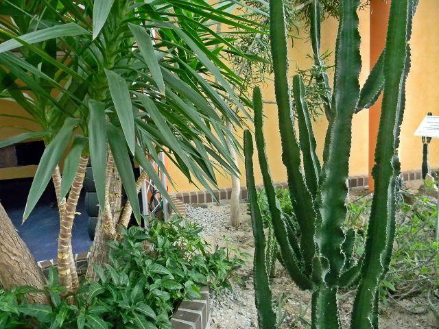 palmy, sukulenty, palmiarnia, Zielona Góra