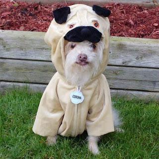 Anjing Lucu Dengan Kostum anjing